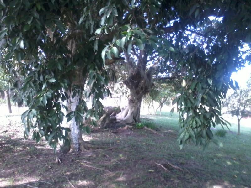 Sítio, Zona Rural, Sentinela do Sul (CS31004011) - Foto 14