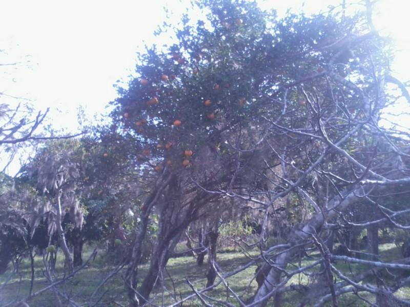 Sítio, Zona Rural, Sentinela do Sul (CS31004011) - Foto 17