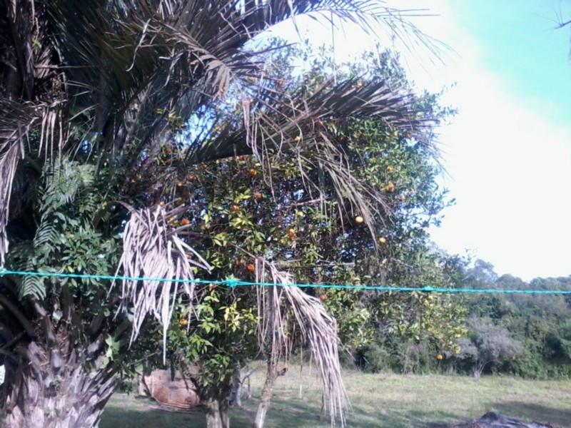 Sítio, Zona Rural, Sentinela do Sul (CS31004011) - Foto 18