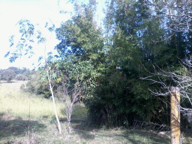 Sítio, Zona Rural, Sentinela do Sul (CS31004011) - Foto 6