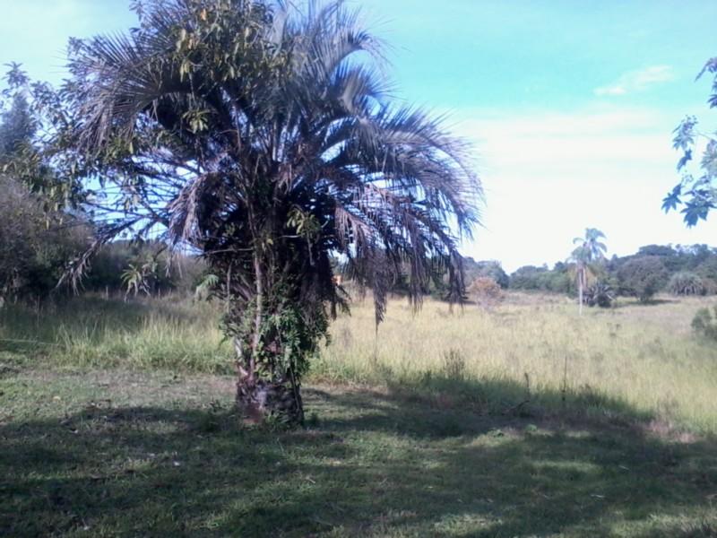 Sítio, Zona Rural, Sentinela do Sul (CS31004011) - Foto 7