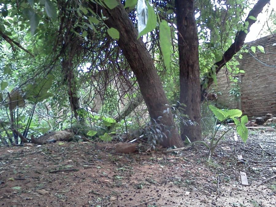 Sperinde Imóveis - Apto 3 Dorm, Petrópolis - Foto 7