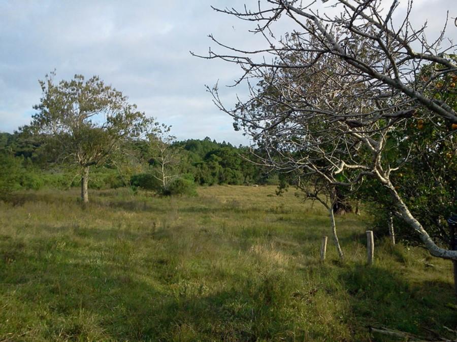 Sitio Monte Belo - Sítio, Itapuã, Viamão (CS31004721) - Foto 6